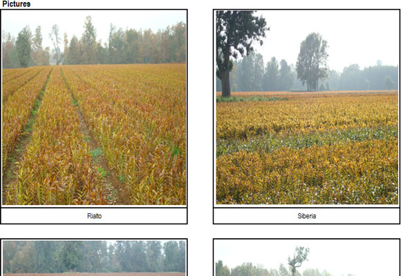 Pictures of field in Chile (by Sone bulb) (10th,May,2011)