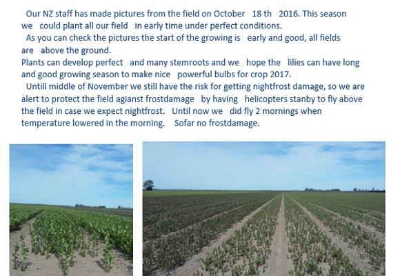 New Zealand Report from Royal Van Zanten(October21st, 2016)