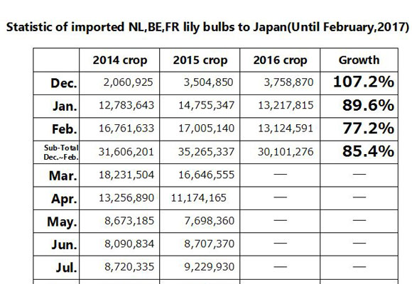 Statistic of imported NL,BE,FR lily bulbs to Japan(Until Feb, 2017) (Mar 13, 2017)
