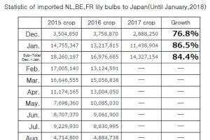 Statistic of imported NL,BE,FR lily bulbs to Japan(Until January,2018)