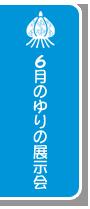 6 月のゆりの展示会