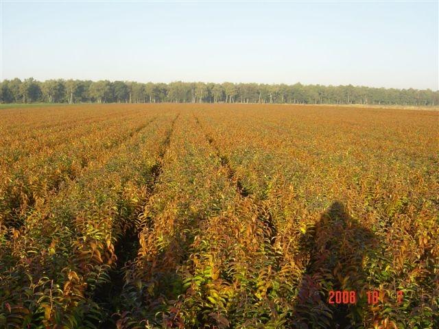オランダ生産地の写真(ヤンデウィット社より)(2008/10/15)