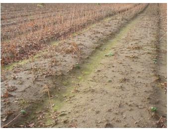 南半球産の収穫状況について(中間報告) (2010/7/31)