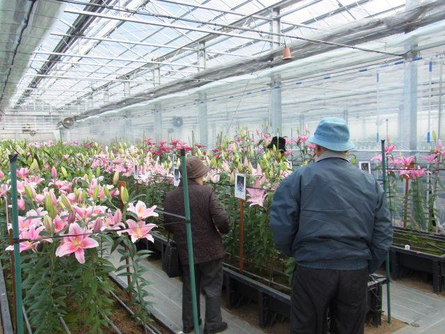 試験農場一般公開 兼 春植え球根バザール開催の御礼(2012/2/10)