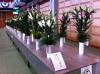 平成25園芸年度 高知県園芸品展示品評会 (2013/2/8)