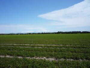 ニュージーランド生産地の写真(バンザンテン社より)(2010/10/26)